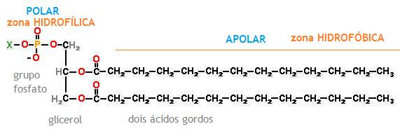 tipos de esteroides naturales