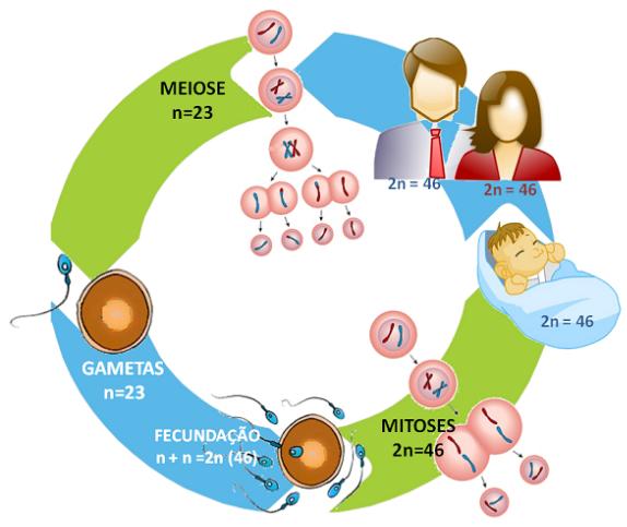 Ciclo de vida de uma planta