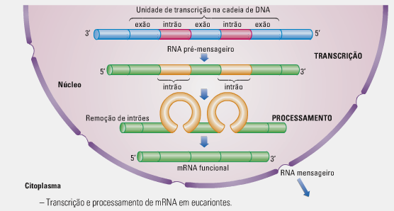 protein sysnthesis Now that we've described dna and rna, it's time to take a look at the process of protein synthesis the synthesis of proteins takes two steps: transcription and.